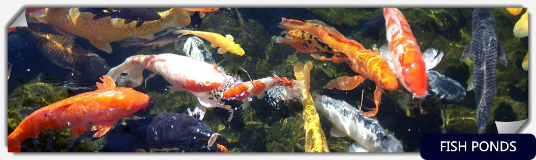 fish3-1024-285-title